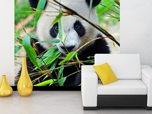 fon-fotooboi-panda